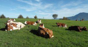 VakıfBank Hayvancılık Kredisi