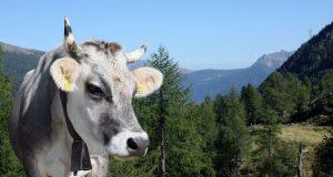 Tarım ve Hayvancılık Kredisi Veren Bankalar