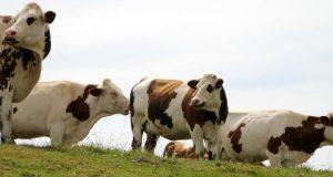 Ziraat Hayvancılık Kredisi