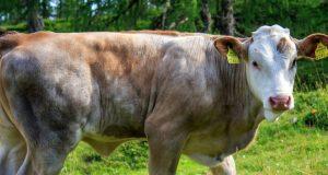 Hayvancılık Kredisi VakıfBank