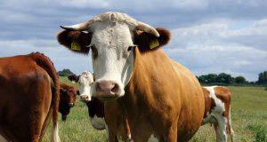 Finansbank Hayvancılık Kredisi Özellikleri