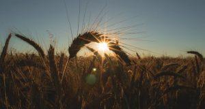 Sözleşmeli Üretim Kredisi Nedir